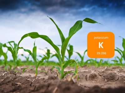 Potassium in plants