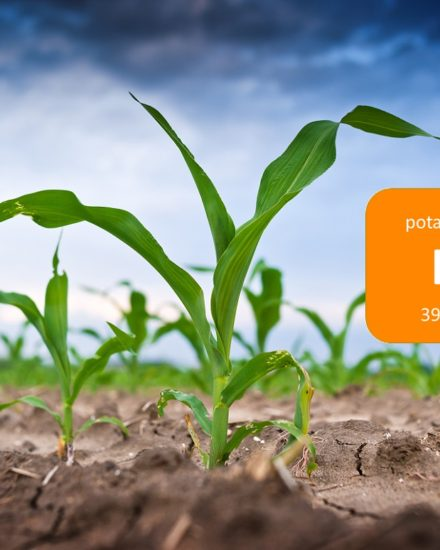 Potassium in plants