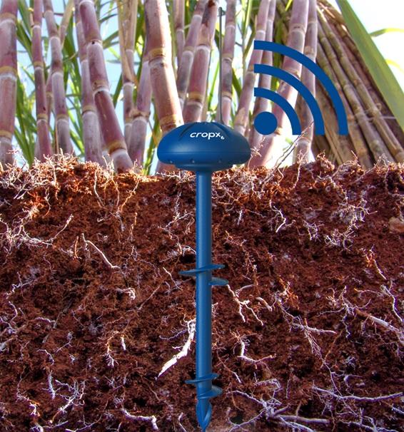 Soil moisture sensor in sugarcane